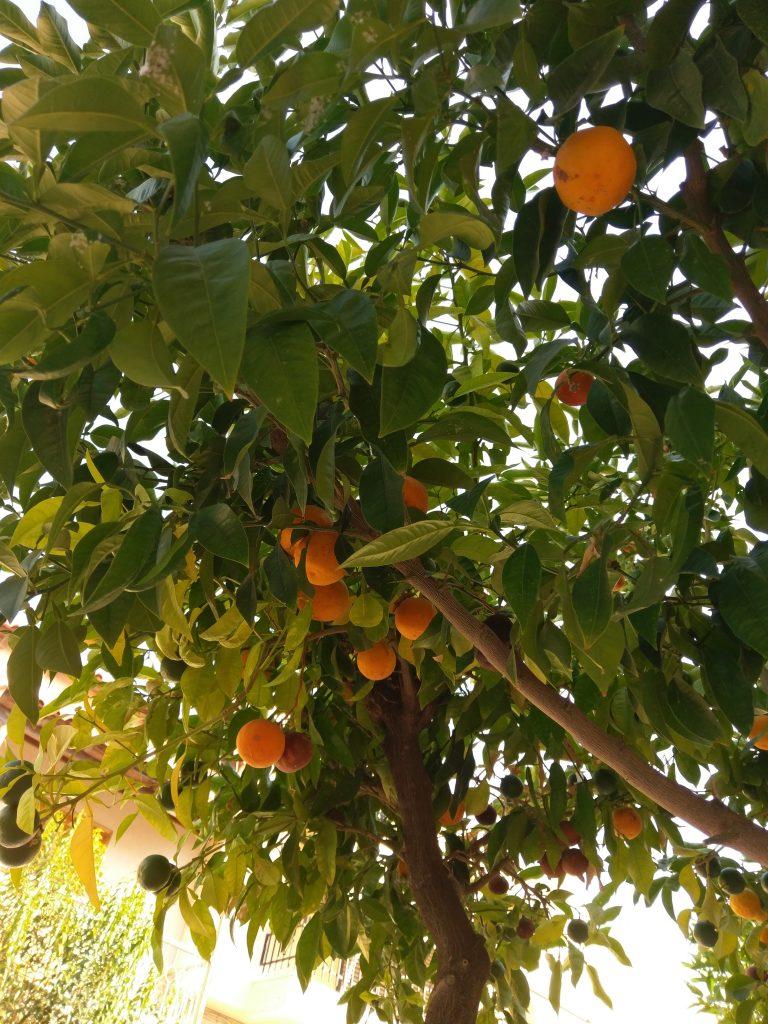 Orangenduft in den Straßen Korinths