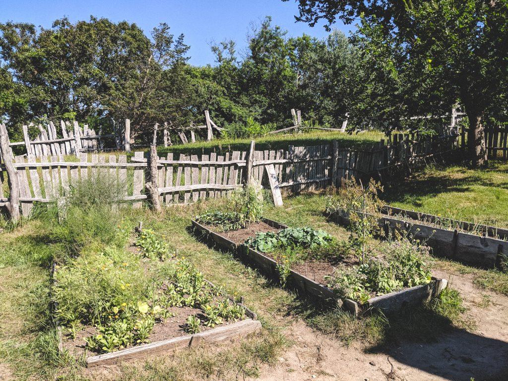 Anbau von Pflanzen und Gemüse