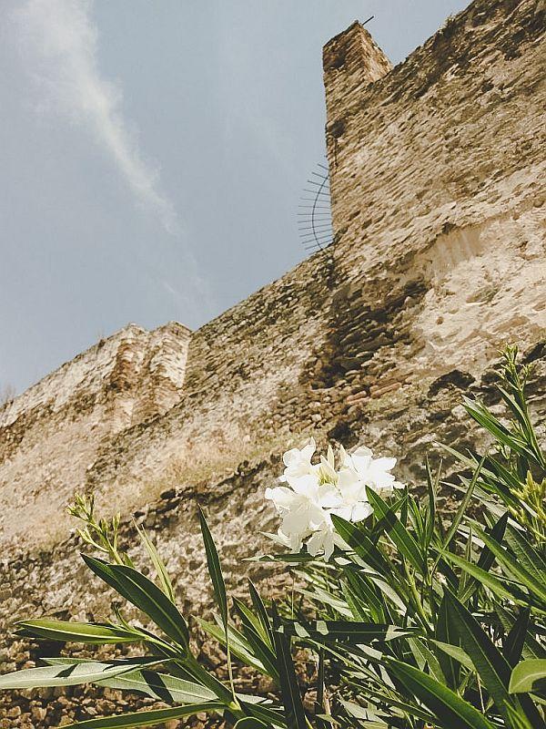 Natur an der alten Ruine
