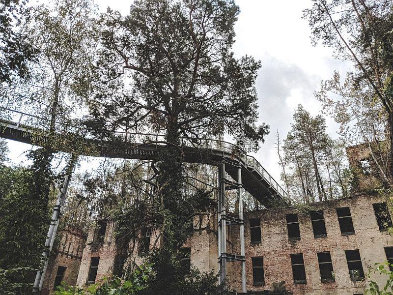 Der Baumkronenpfad in Beelitz