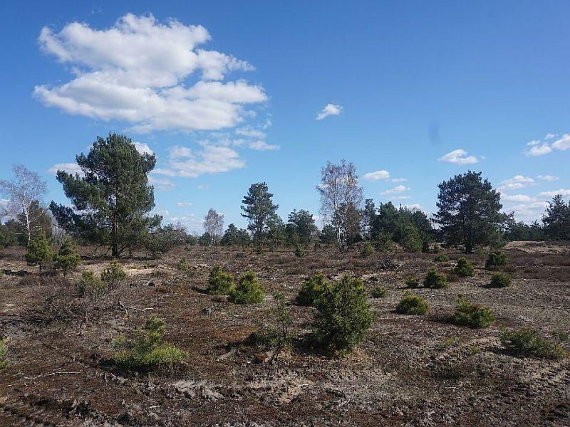 Ausflugsziele in Brandenburg - Der Grumsiner Forst
