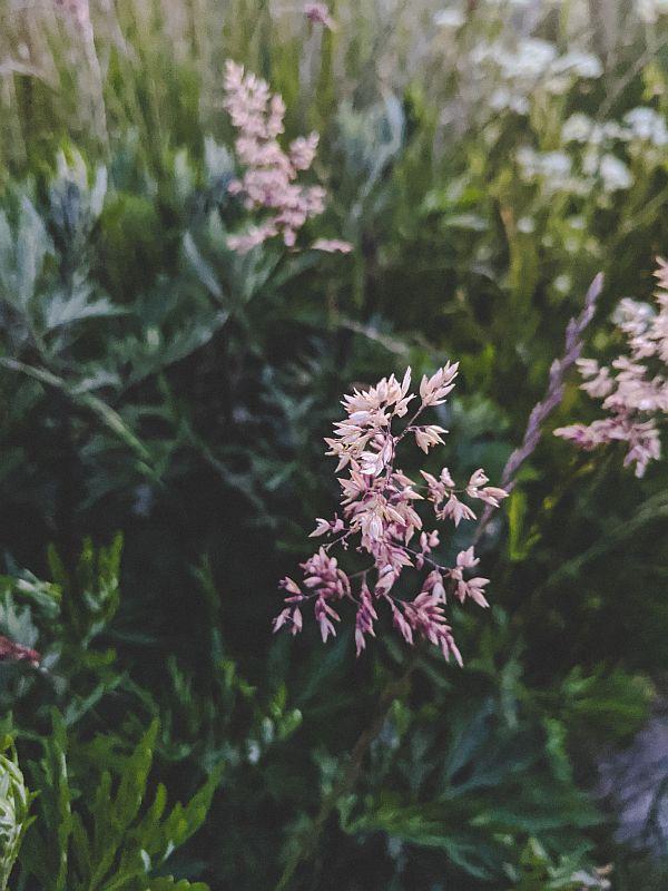 Frische Blumen vom Feld