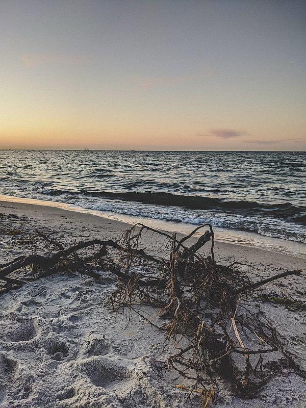Boltenhagen Tipps - Herangespültes Strandgut