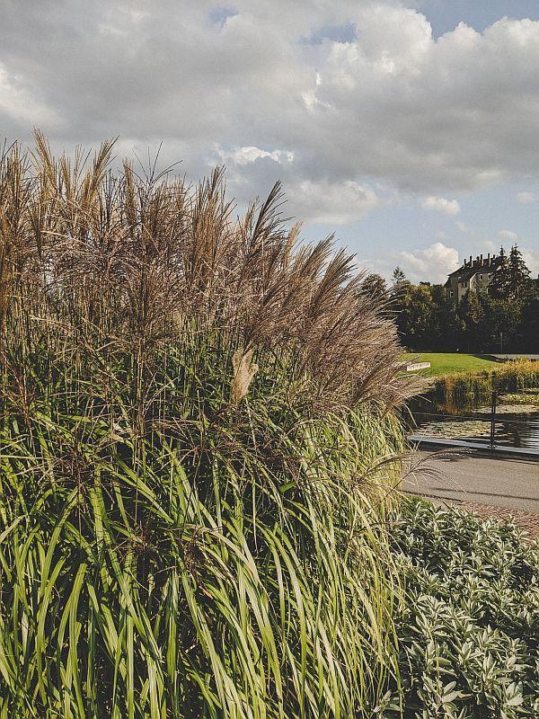 Zeitz Tipps - Der Schlosspark mit Gräsern am Johannissteich