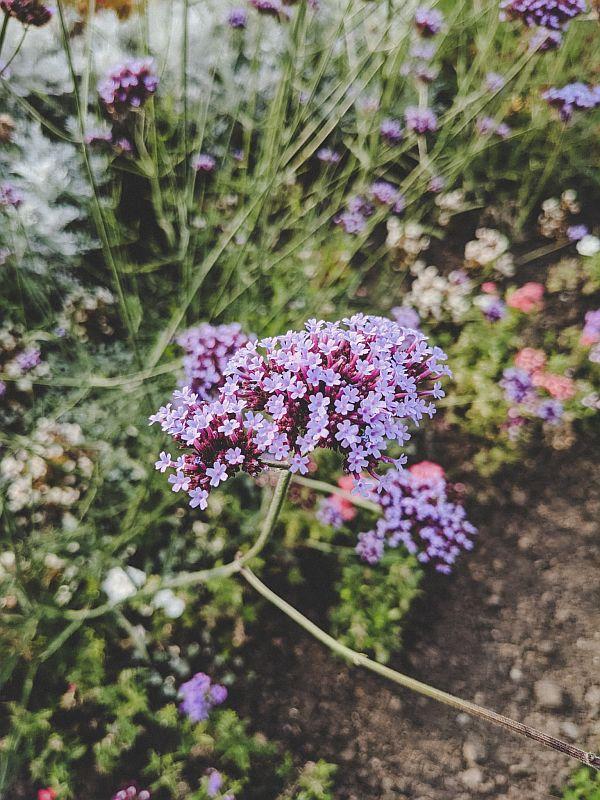 Bunte Blumen im Schlosspark Zeitz