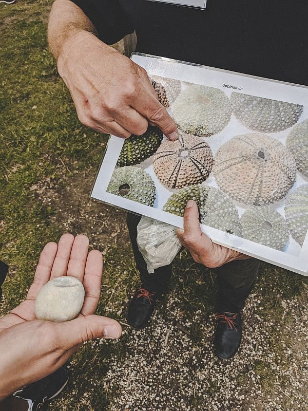 Ausflug nach Stevns Klint - Fossilienfunde und versteinerte Seeigel