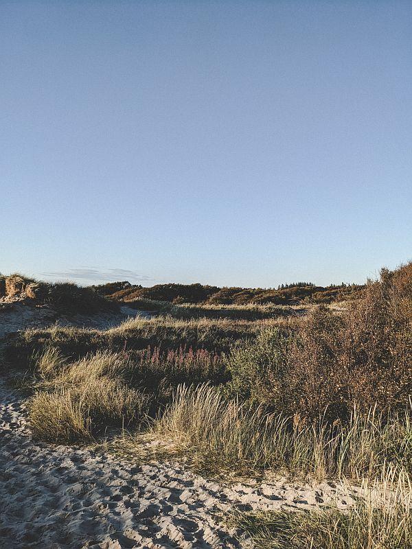 Wilde Natur Rabjerg Mile
